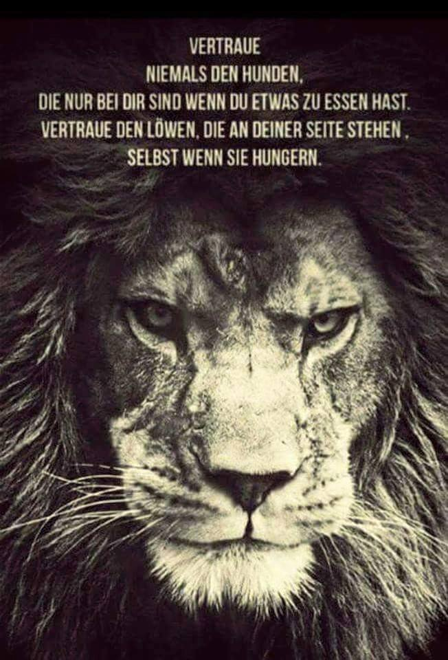 Vertraue den Löwen
